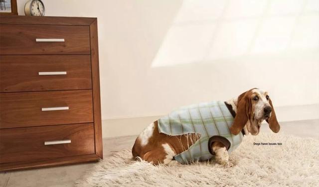 狗狗耳朵的护理